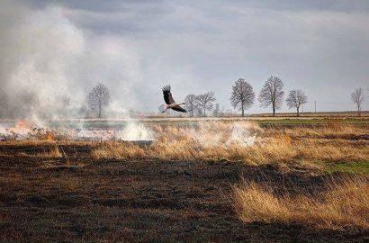 Увага! Підвищено розміри штрафів за випалювання рослинності та її залишків