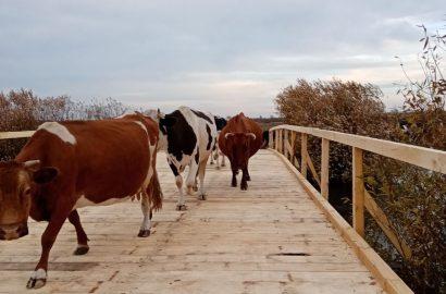 Відновили дерев`яний міст у Смячі